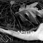 """Bone-BW"" by drakavai"