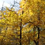 """""""Golden Leaves"""" by BethsSpecialMoments"""