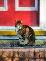 Tabby Cat by Red Door