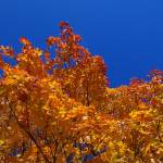 """Fall Colours"" by ChrisHudson"