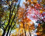 Autumn Trees Photo Manipulation by Kristen Fox
