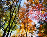 Autumn Trees Photo Manipulation