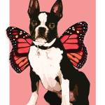"""Fairy Boston Terrier"" by peekapooch"