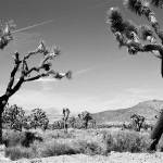 """Joshua Tree National Park"" by ChrisHudson"