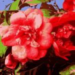 """Fairmount Flowers"" by AndySchwartzArt"