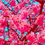 """""""Tree Flowers"""" by AndySchwartzArt"""
