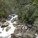 """Misty Spider Web"" by phillipc81"