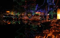 Christmas lights in Van Dusen Garden