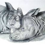 """Resting Rhinos"" by serendipityofalnwick"