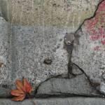 """""""UrbanLeavesSanFrancisco"""" by MyThirdEye"""