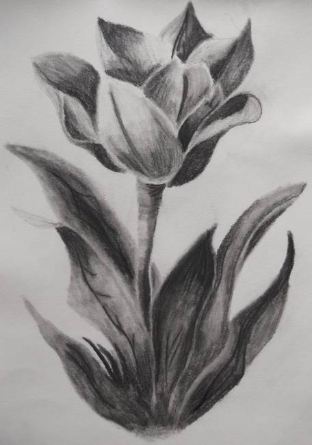 Stunning flowers charcoal drawings and illustrations for for How to draw a really good flower