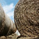 """""""Hay"""" by sondrasula"""