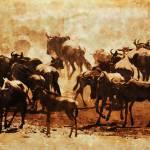 """""""Wildebeest at Sunset"""" by amynnasser"""