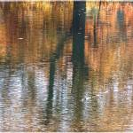"""Reflections at Radnor Lake"" by GiorgettaMcRee"