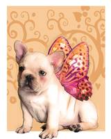 Sweetie Frenchie
