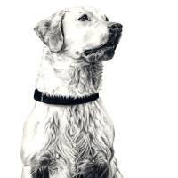 Working Dog Art Prints & Posters by Jordan Banks