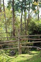 Wood Rail Fence in a Forest