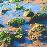 """""""Frontage Road Seaweed Beach"""" by photoartful"""