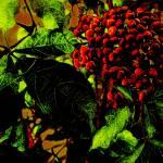 """""""Coffea arabica"""" by sandrapenadeortiz"""