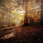 """""""Sunbeam in the forest"""" by zoomphoto"""