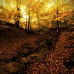 """""""Forest Haslev, Denmark - Autumn"""" by zoomphoto"""