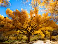 Cottonwood Contrast