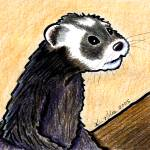 """KiniArt Ferret"" by KiniArt"