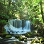 """Horseshoe Falls Tasmania"" by PeteH"