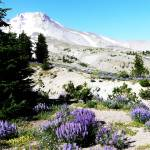 """Day out to Mount Hood, August 2011"" by rgtmum"