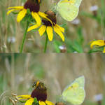 """Butterfly and Bee Vertical Diptych"" by dansmith"