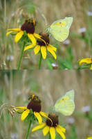 Butterfly and Bee Vertical Diptych