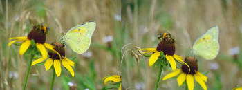 Butterfly and Bee Horizontal Diptych