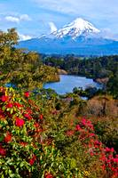 Mount Tarinaki and Roses, New Zealand
