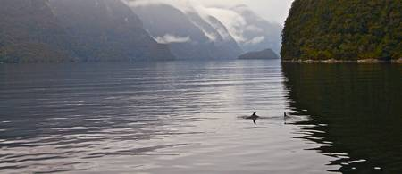 Dolphins in the Bay - New Zealand