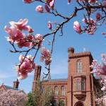 """Smithsonian Castle and Blossoms"" by phillipc81"
