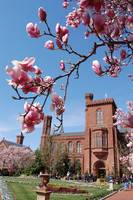 Smithsonian Castle and Blossoms
