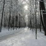 """Wintery Park Walk"" by Photomarketingusa"