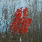 """Red"" by Photomarketingusa"