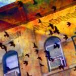 """""""Rock Doves In Flight"""" by JamesHanlon"""