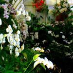 """""""Flowers 19"""" by njchip123"""