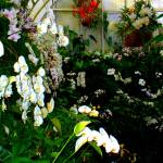 """Flowers 19 by Chip Fatula"" by njchip123"