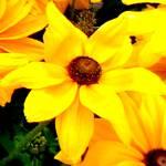 """Flowers 15 by Chip Fatula"" by njchip123"