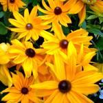 """Flowers 20 by Chip Fatula"" by njchip123"