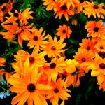 """Flowers 1 by Chip Fatula"" by njchip123"