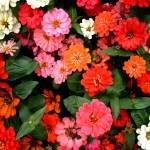 """Flowers 3 by Chip Fatula"" by njchip123"