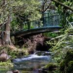 """""""Bridge over stream"""" by DougS"""