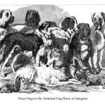 """Prize Dogs in the National Dog Show at Islington"" by jaredjared"