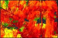 Abstract Autumn Color