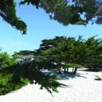 """cypress_n_sand_1"" by gbensonart"