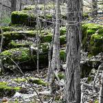 """mossy rocks"" by johngiroux"
